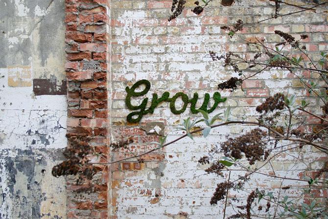 brick-wall-grow-moss