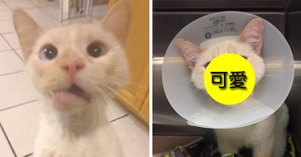 這隻可憐的小貓下巴被撞斷,沒想到治癒後網友一看到他的臉都說:「因禍得福!」