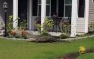 這名男子在溜狗時,發現有隻鱷魚在鄰居家的門前徘徊,結果就錄下了驚人的畫面...