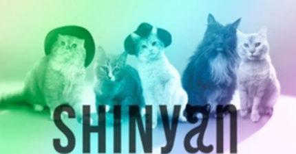 這個知名貓咪樂團光看起來就已經很可愛了,但當他們「開口唱歌時」,真的把我嚇傻了!