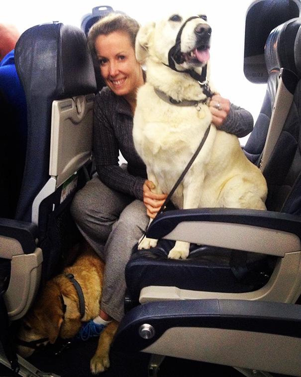 因為大火加拿大航空破例讓毛寶貝一起上飛機!其中一名懷孕貓咪的待遇更讓人羨慕死了!