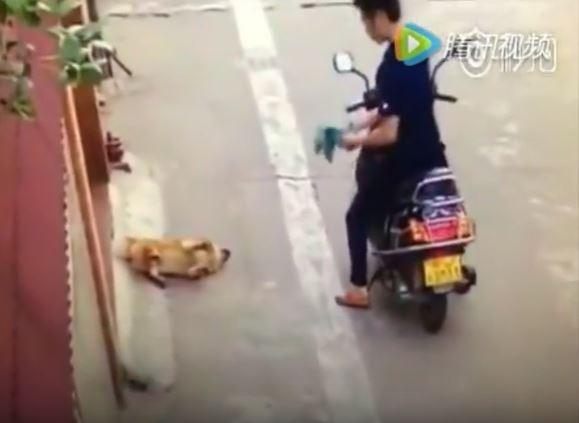 貓狗主人注意!影片清楚拍到狗肉販子用「超無恥手段」把狗狗給弄昏偷走,26秒就是你要千萬小心的地方!