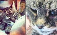 這隻「史上最老的老奶奶貓」已經活了25年但卻被小屁孩拿槍射死,但最可惡的是聽到獸醫說的那句話...