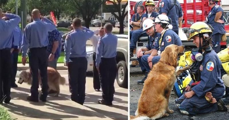 看到這些消防員列隊以為是要向誰行禮致敬,結果走下車的居然是一隻拉拉...接著讓我哭死了!