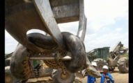 巴西工人在開挖山洞時遇到「一團黑黑蜷起來的東西」,結果走近一看...差點沒嚇到屁滾尿流!