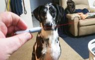 很多人都喜歡拿雷射筆跟狗狗玩遊戲,但現在知道傷害有多嚴重可能都來不及了...
