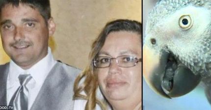 主人跟他老婆同時倒臥屋內 鸚鵡重複說「不要開槍」揭懸案真相