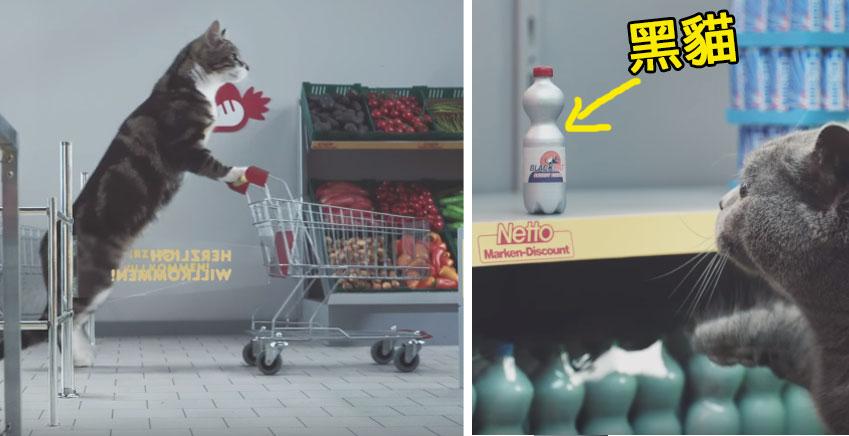 這隻貓咪去打折超商搶貨,但在48秒最後一瓶「黑貓」要被幹走時他的反應已經讓我嗨翻天了!