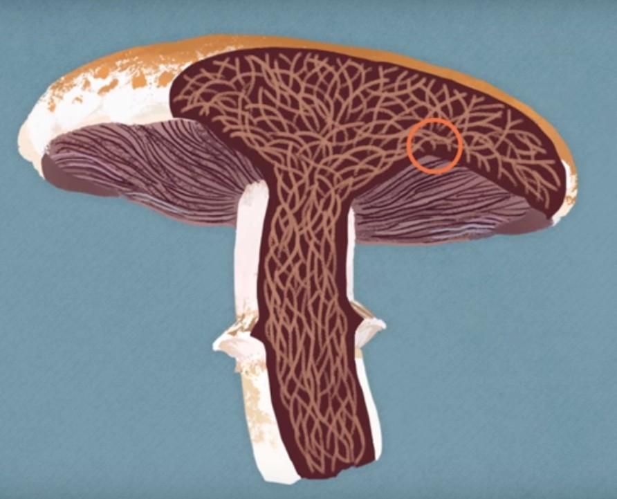 當你把蘑菇煮太久,這就是會發生的超驚人事情。