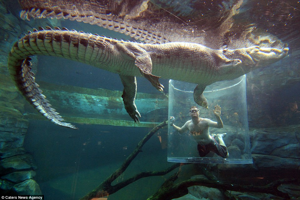 很多人都跑去這「死亡之籠」跟鱷魚玩命!看到鱷魚的「特別表演」我覺得付我錢都不敢!