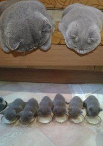 11張證明「貓星人父母的複製科技」其實已經超越人類的超萌照片,但右邊那個墨水好像已經快用完了...