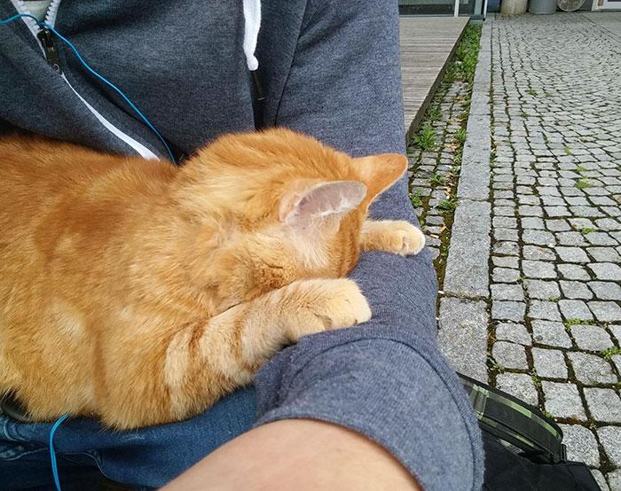 這間學院學生的功課不知道為什麼都很好,但你只要看到這隻貓咪在學校裡做的事情就會秒懂了!
