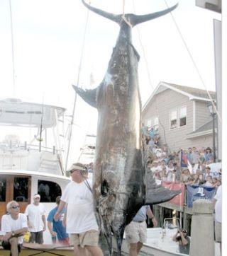 這名漁夫釣起破紀錄「400公斤藍槍魚」以為贏定了,沒想到因為想省160塊而竟害他因此損失三千萬台幣!