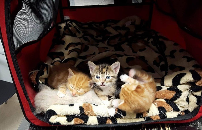 paralyzed-cat-mother-kittens-princess-2