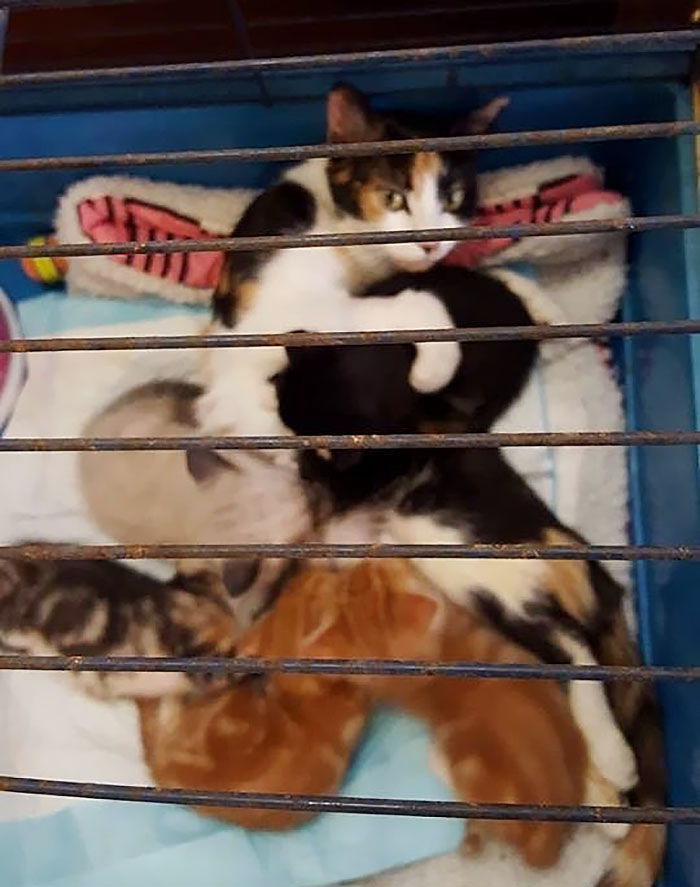 paralyzed-cat-mother-kittens-princess-1