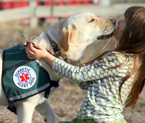 這就是狗狗聞出「糖尿病患者有發病風險」的神奇方法!