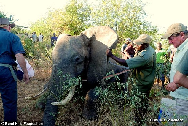 On the mend: Ben is now healing on the property after his wounds were disinfected and treated by the vet