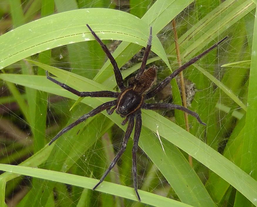 這隻老鼠般大小的蜘蛛靠近池塘時我還以為他想喝水,結果1:00發生的事已經扯到讓我又重播一次了!