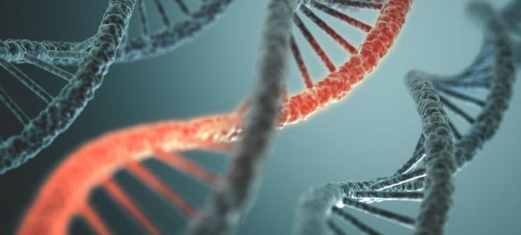 Genetics-e1457740831926