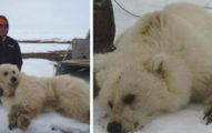 獵人在加拿大殺了一隻沒有見過的熊,一仔細發現到熊的品種才發現人類也即將要滅亡了...