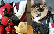 這名水電工把兩位貓星人變成了科幻劇主角,達爾那個造型已經可以得奧斯卡了!