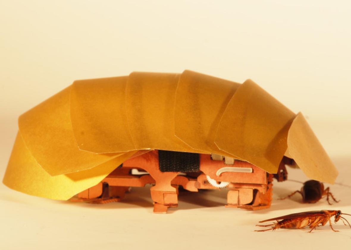 cram_with_cockroach.jpg.CROP.promo-xlarge2