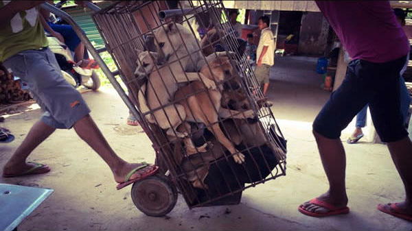 他「從狗肉節救出300隻狗」差點被打死3次,聽到他拯救狗狗的超冒險讓我已經佩服到跪下了!