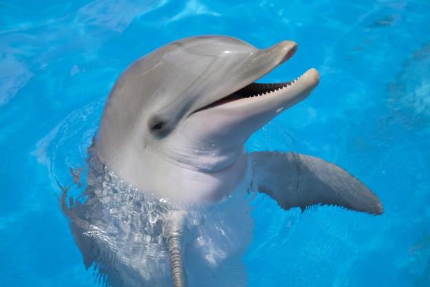 訓練員給海豚很多魚「他每次都不吃光」 躲起來偷看發現...海豚比很多人類還聰明!