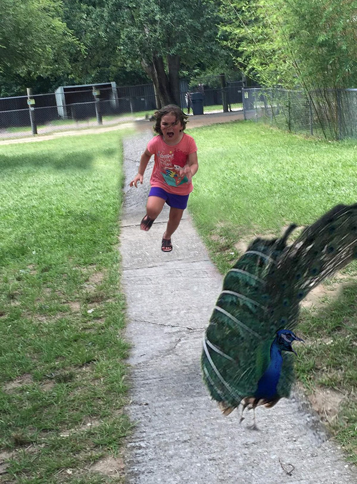 girl-running-from-peacock-photoshop-battle-23-57723bc7ea810-png__700