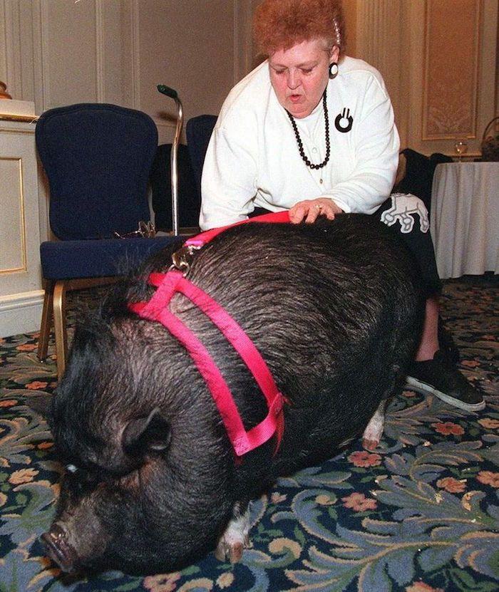 他開車看到一頭豬死在路上,沒想到一接近就救了一個人命!