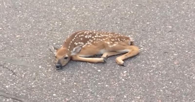 他們在馬路上看到一隻奄奄一息的受傷小鹿,沒想到一走進就發生了「奧斯卡等級」的異變!
