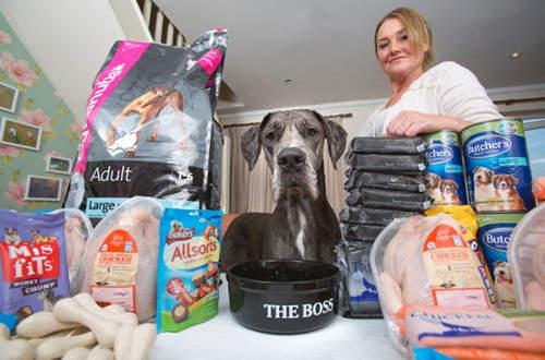 「全世界最大225公分70公斤狗狗」在家站起來頂到天花板,「每個禮拜超不科學食物量」一般人根本養不起!