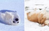 40張超可愛海狗照片證明為什麼「海狗會被稱為海狗」!