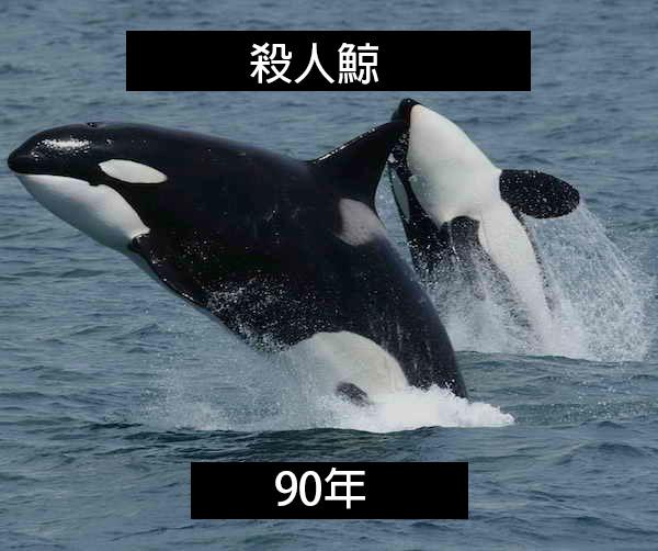 24個「自然界最殘酷的動物壽命」標準 水母絕對是人生贏家!
