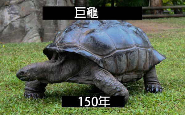 the-fascinating-lifespan-of-animals-21