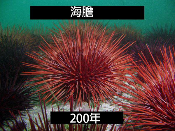the-fascinating-lifespan-of-animals-22