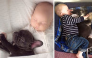 25張狗狗跟小嬰兒抱在一起睡覺的照片!證明小朋友長大時有毛手足童年才完整!
