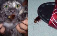 學者表示絕對不能「用拖鞋打蟑螂」,這是最危險的行為!