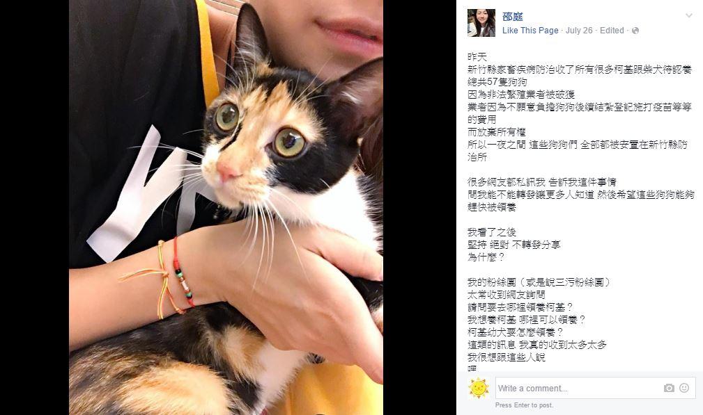 藝人邵庭PO出自家可愛柯基照引來大批網友問「哪裡認養?」,她一氣之下怒回2000字開罵!