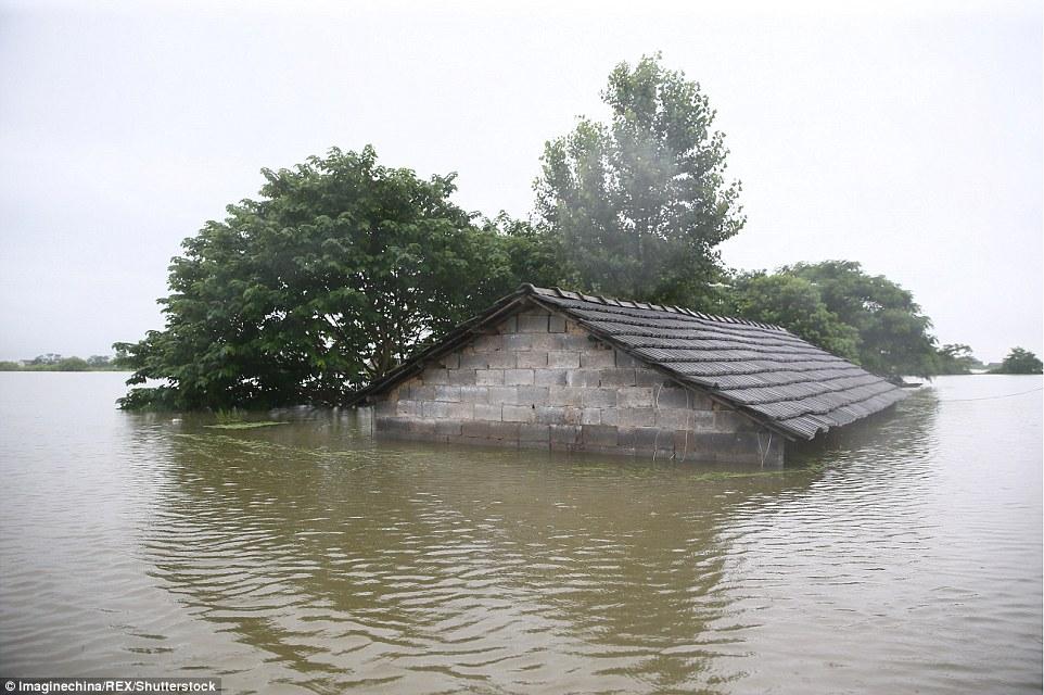 他因洪水無法救出養大的6千多頭豬就當場爆哭,網友聽到「今夜真相」後忍不住又心痛了!