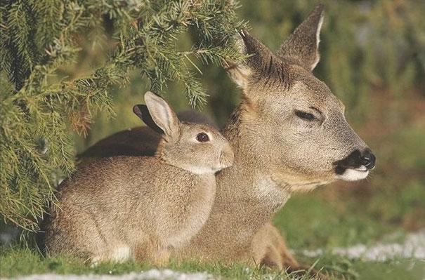 40張「動物爸爸在外面偷生被抓到」的超可愛雙胞胎照片