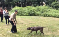 軍人主人出任務離開一年狗狗還以為自己被拋棄,當一見面時他的「小宇宙噴發」反應會讓你徹底爆淚!