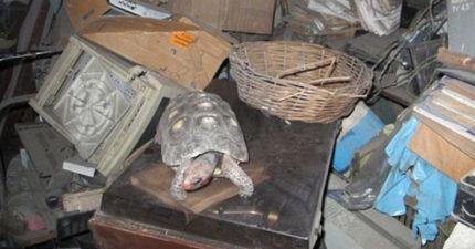 家裡寵物龜消失時家人都很傷心,沒想到30年後整理爸爸遺物時才發現「30年不吃不喝存活真相」!