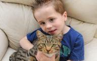 小主人被惡霸欺負這隻小貓咪就出手摧毀惡霸,之後媽媽更觀察到更令人吃驚的行為...
