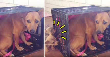 這隻狗媽媽以為自己和寶寶們永遠分開了傷心不已,當他們終於重逢時「媽媽的溫暖感謝眼神」會讓你忍不住泛淚…