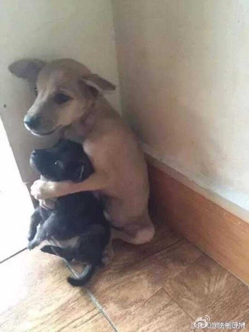 兩隻狗狗被不負責任主人拋棄後,比較大的就這樣抱著弟弟保護他。