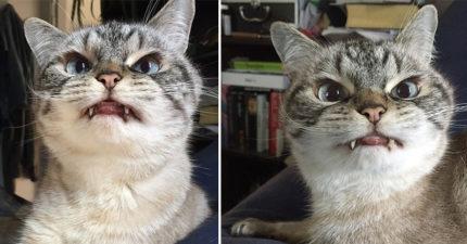 這隻眼神超殺的「吸血鬼貓」洛基看起來很恐怖,但她跟主人的模樣會讓你了解完全誤會他了!