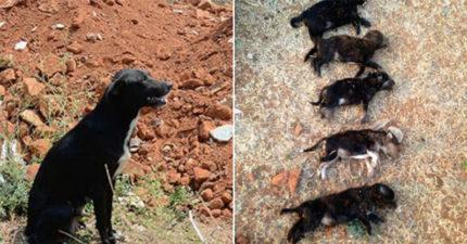 印度女子為了給狗媽媽教訓,當她的面「狠狠摔死8隻狗寶寶」。