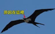 這就是為什麼有些鳥可以「一邊睡覺一邊飛行幾的月都不停」也不會死掉的超越科學原因!