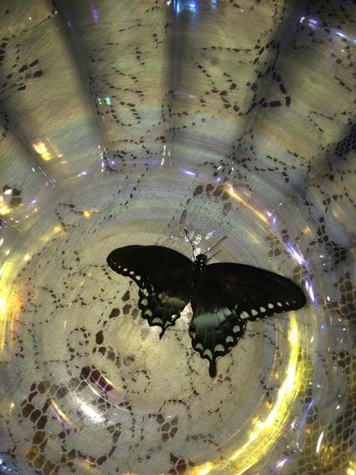 這隻「超像寶可夢的毛毛蟲」的成長過程引起43萬網友討論,最後蛻變才發現這麼珍貴!